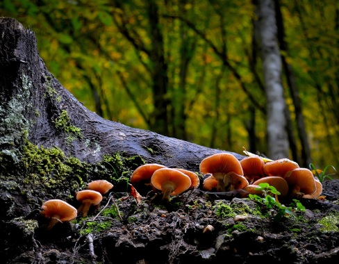Chitin is a fungus' wall component