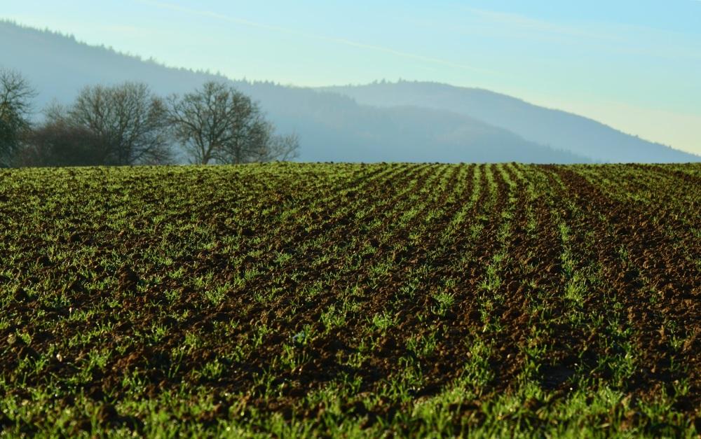 sown field.jpg
